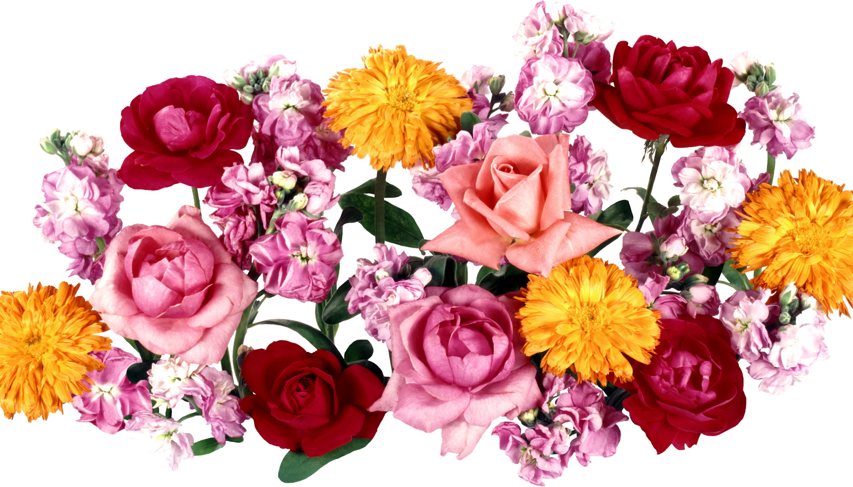 flowers-pink-magenta-chrysanthemums-flower-plant-roses-petal-peony-song-land-plant-flowering-plant-floristry-flower-bouquet-flower-arranging-floral-design-cut-flowers-artificial-flower-717812